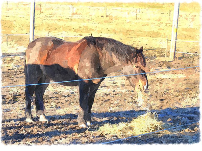 Hästhagar, Angarn